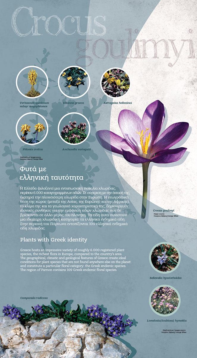 tetragon-votanikos-leonidio-b03